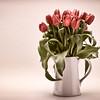 A Jug Full of Tulips