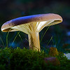 Mushroom, Tyresö, Stockholm Sweden