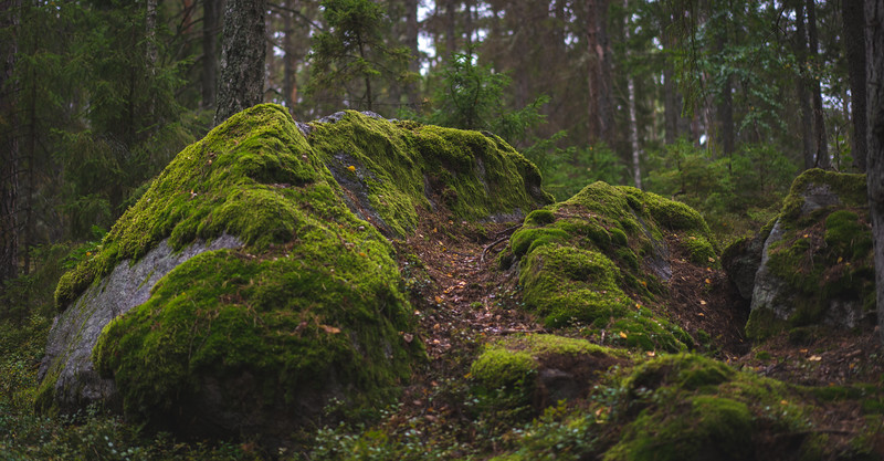 Good Moss