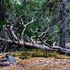 Tyresta nationalpark virgin forest