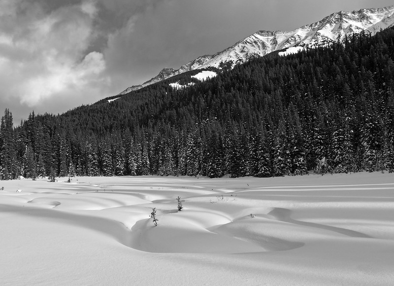 Contrasts of snow and shadow, in  Tyrwhitt meadows.