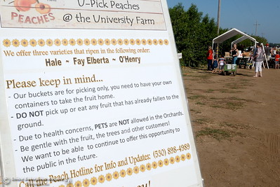 A sign helps fruit lovers with some things to keep in mind as they pick peaches at the CSUC University Farm U-Pick Peach orchards in Chico, Calif. Thurs. Aug. 10, 2017. (Bill Husa -- Enterprise-Record)