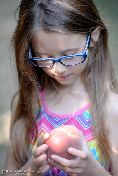 """6-year-old Kara McLafferty said she likes to pick the ones where """" I don't see any bad spots"""" on them. Lots of people came out to pick peaches at the CSUC University Farm U-Pick Peach orchards in Chico, Calif. Thurs. Aug. 10, 2017. (Bill Husa -- Enterprise-Record)"""