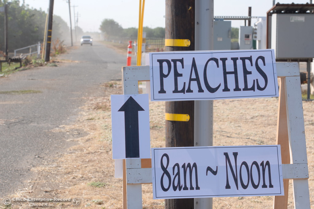 . Signs point the way as fruit lovers head down a dusty road to pick peaches at the CSUC University Farm U-Pick Peach orchards in Chico, Calif. Thurs. Aug. 10, 2017. (Bill Husa -- Enterprise-Record)