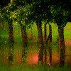 "ETC-3467 ""Treeline Reflection-Cezanne "" Med  file_5088"