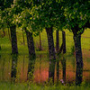 "ETC-3466 ""Treeline Reflection "" Med file_5088"