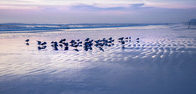 "ETC-3327  ""Blue Beach Birds"""
