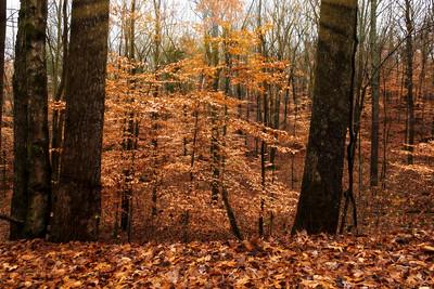 "ETC-3445  ""Autumn Beauty"""
