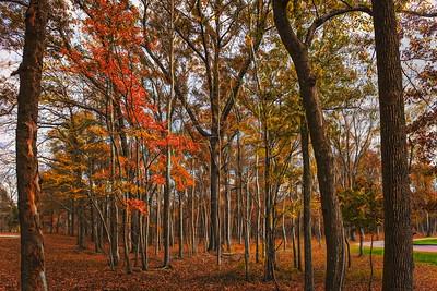 """ETC-3335  """"Grove of Trees"""""""