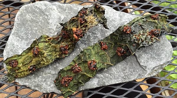 kale and black truffles