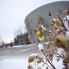 """Flower in the snow outside of the UAA/APU consortium library  <div class=""""ss-paypal-button"""">110415 Campus-TEK-01_1.JPG</div><div class=""""ss-paypal-button-end""""></div>"""