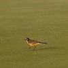 Yas Island--Yas Links Golf Course, 22.04.2018<br /> © John Adams