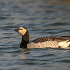 Saih al Salam--Duck Lake and eastern plain