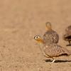 Saih al Salam--Qudra Lake, 30.10.2018<br /> © Vipin Sharma