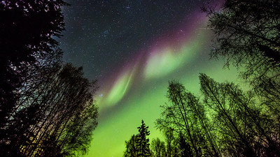 The aurora borealis is a prime attraction to northern skies during the dark winter months. UAF photo by Todd Paris.