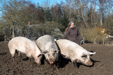 Dyrenes Frie Farm
