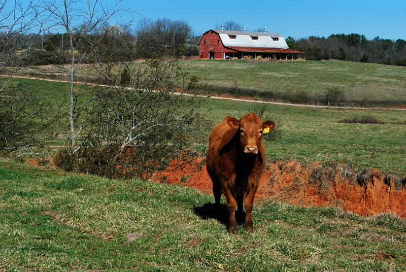 Red Barn, University of Georgia, Athens, GA (Clarke County). 2008