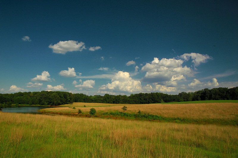 Athens, GA (Clarke County) July 2010