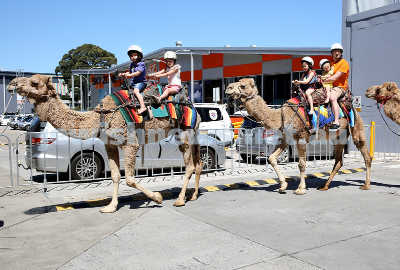 UIA Young Families Israeli Summer Days at The Venue. People enjoying camel rides. Pic Noel Kessel