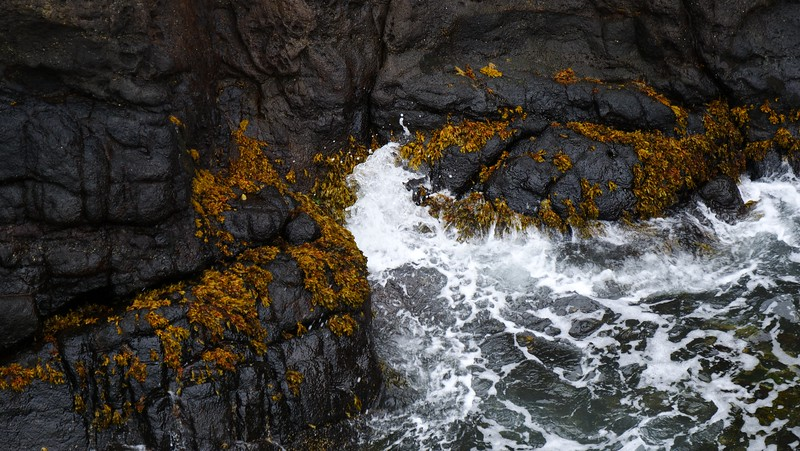 Gobbins Cliff Path Experience (Causeway Coastal Route)