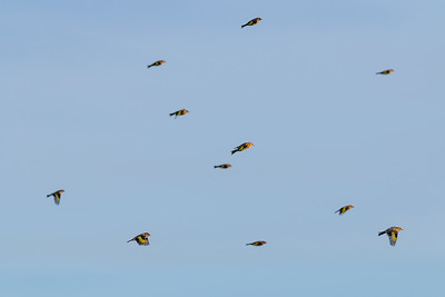 Goldfinch Charm