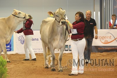 UK Dairy Day 2016 Brown Swiss