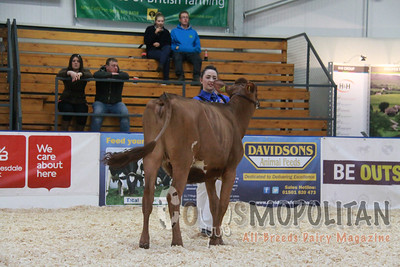 UK Dairy Expo Ayrshires 2015