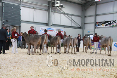 UK Dairy Expo Brown Swiss 2015