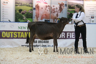 UK Dairy Expo Jerseys 2015