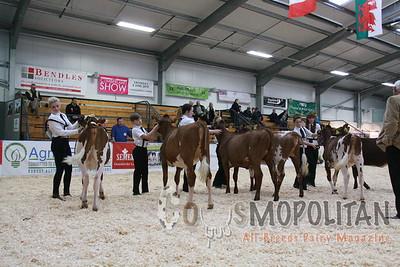 UK Dairy Expo Shorthorn 2015