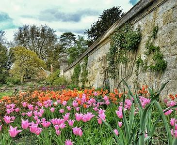 """Tulip Time"" - Botanic Garden Oxford"