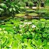 """Oxford Botanic Garden"" - Oxford, England"