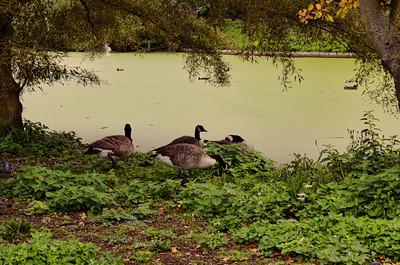 Regents Park, London, United Kingdom - 2014.