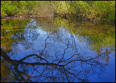 Bolam Lake Country Park, Northumberland, UK - 2017.