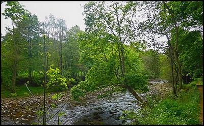 Allen Banks & Staward Gorge, Northumberland, UK - 2017.