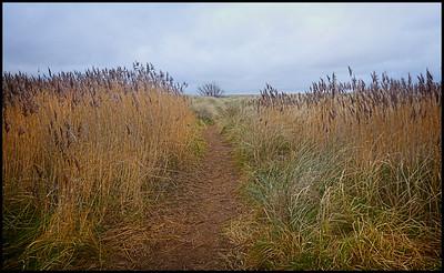 Seaton Sluice, Northumberland,  UK - 2020.