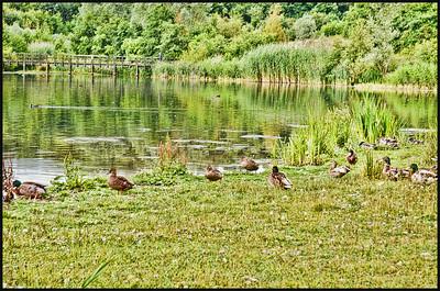 Watergate Forest Park, Gateshead , Tyne & Wear, UK - 2014