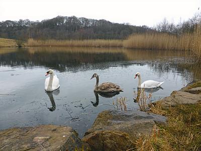 Derwent Walk Country Park.