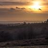 Ashdown Forest-3