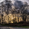 Ashdown Forest-6