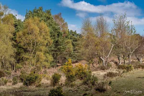 The Old Lodge Nature Reserve in Ashdown Forest