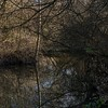 Tall reflections on Ditchling Common