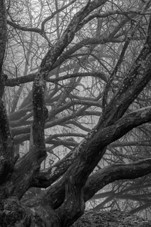 A Tangle in the Mist