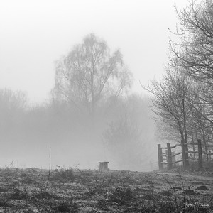 A Winters Morning on Ditchling Common