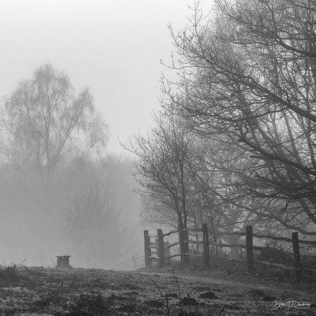 Mist on the Common