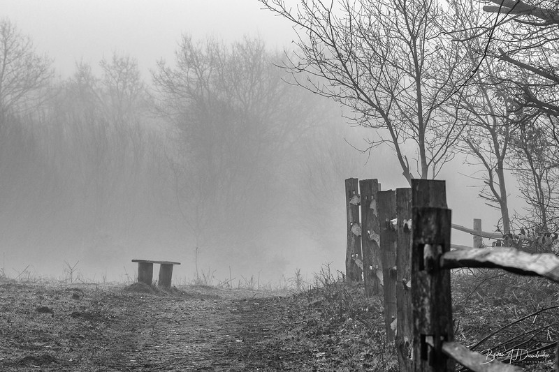 Morning Mist on Ditchling Common