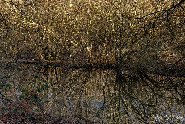 Winter reflections on Ditchling Common