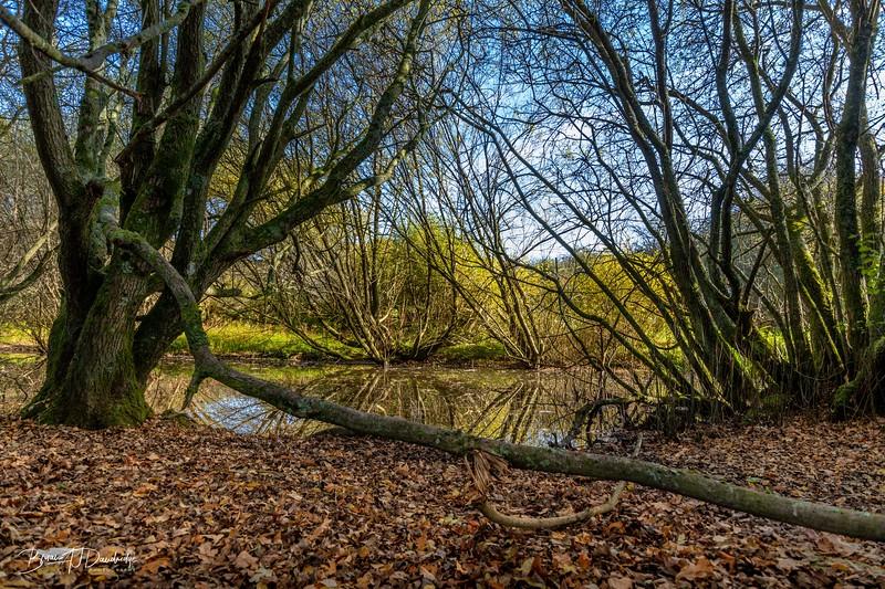 Autumn colour on Ditchling Common