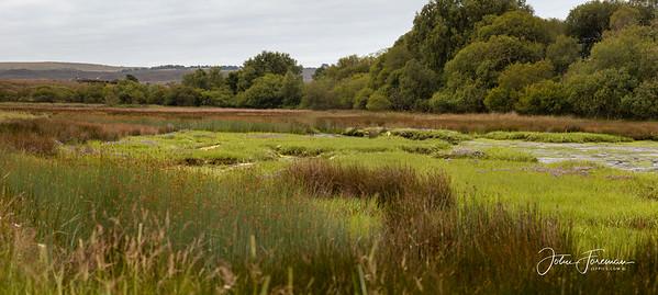 Studland, Dorset
