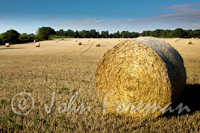 Harvest roll
